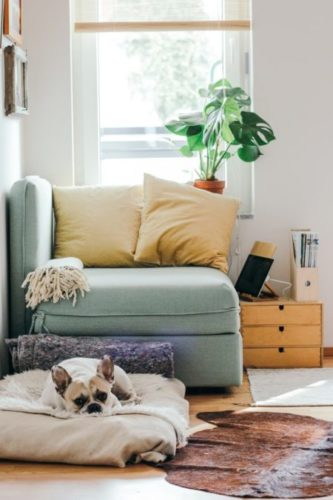5 Best Staple Guns for Upholstery | Reviews and Buyers Guide