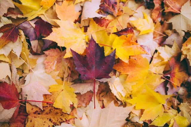 5 Best Electric Leaf Mulchers | Reviews and Buyers Guide